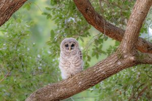 Barred Brancher _ Andrew Mease